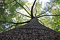 Branching Tree.jpg