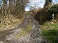 Bridleway - geograph.org.uk - 148464.jpg