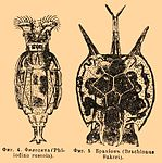 Brockhaus and Efron Encyclopedic Dictionary b30 715-2.jpg