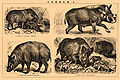 Brockhaus and Efron Encyclopedic Dictionary b57 150-1.jpg