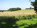 Broken Back Plantation - geograph.org.uk - 1378706.jpg