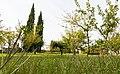 Brolo del Convento di S. Francesco.jpg