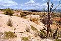 Bryce Canyon NP27.jpg