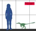 BuitreraptorSIZE.png