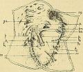 Bulletin de la Société philomathique de Paris (1902) (20438039125).jpg