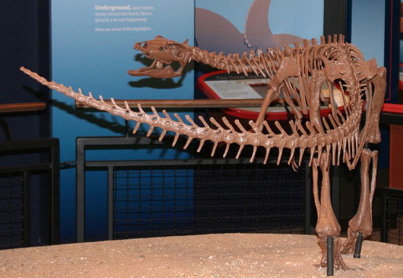 File:Burpee - Thescelosaurus.JPG