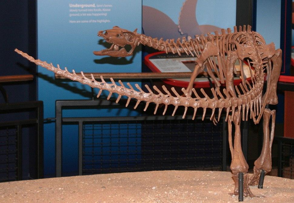 Burpee - Thescelosaurus