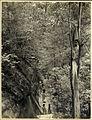 Bushwalking on Lady Carrington Drive to the Lower Falls at Waterfall, Royal National Park (NSW) (7701486584).jpg