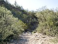 Butcher Jones Trail - Mt. Pinter Loop Trail, Saguaro Lake - panoramio (170).jpg