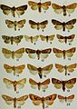 Butterflies and moths of Newfoundland and Labrador - the macrolepidoptera (1980) (19890184243).jpg