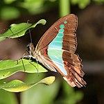 Butterfly 3 (31102864742).jpg