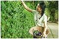Butterfly pea flower Vietnam.jpg