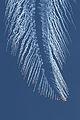 C130-flares.jpg