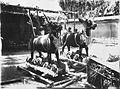 COLLECTIE TROPENMUSEUM Doodskisten in de vorm van stieren voor een crematie op Bali TMnr 60027683.jpg