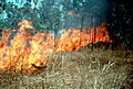 CSIRO ScienceImage 392 Naturally Occurring Fire.jpg