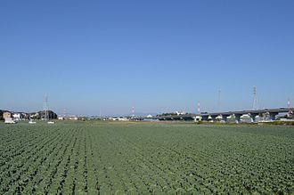 Toyohashi - Cabbage field in Oshimizu-cho