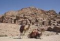 Camels in front of the tombs, Petra, Jordan.jpg