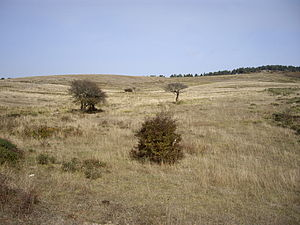 Campoo de Enmedio - Landscape of Campoo de Enmedio in La Mayuela´s zone.