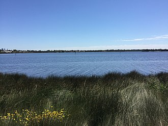 Canning River (Western Australia) - Part of the Convict Fence in Canning River between Shelley Foreshore Reserve and Salter Point.