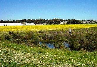 Cape Lowland Freshwater Wetland - Image: Cape Lowland Freshwater Wetlands in Cape Town 6