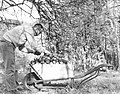 Caption- David Rhodes, a Voluntary Service worker, gathering apples from the mission grounds in Ohain, Belgium, (8077764212).jpg
