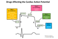 Cardiac action potential.png