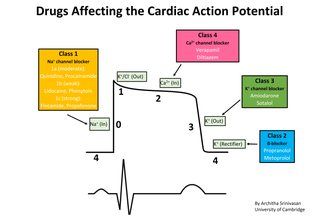 Antiarrhythmic agent - Image: Cardiac action potential