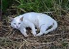 Cat June 2013-1a.jpg