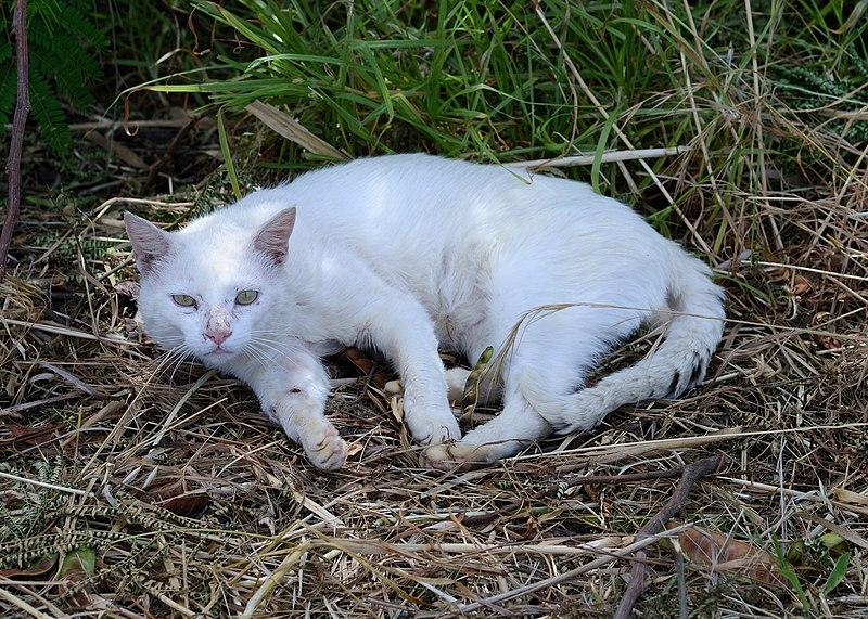 File:Cat June 2013-1a.jpg