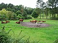 Cattle to the rear of Pine Trees and Bridge Cottage on Shuttlesfield Lane - geograph.org.uk - 957381.jpg