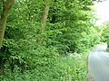 Cawthorne Park and Upper Field Lane - geograph.org.uk - 180462.jpg