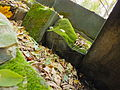Chenstochov ------- Jewish Cemetery of Czestochowa ------- 201.JPG