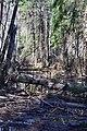 Cherevakha Manevytskyi Volynska-Urochyshche Dzherela nature reserve-view near Cherevakha river-3.jpg