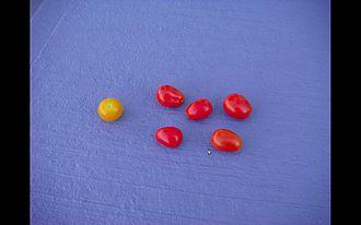 Grape tomato - Cherry tomato on left grape tomatoes on right
