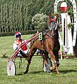 Chestnut French Trotter horse at Guillac, France.jpg