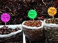 Chiles for Sale - Mercado de Jamaica - Mexico City - Mexico (27039251589).jpg