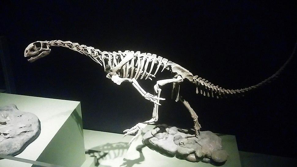 Chilesaurus diegosarezi