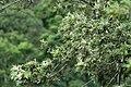 Chinnar Wildlife Sanctuary IMG 9072 (20).JPG