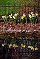 "Cincinnati - Spring Grove Cemetery & Arboretum ""Springtime Flower Reflection"" (4492306871).jpg"