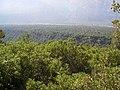 Cipreses. - panoramio.jpg