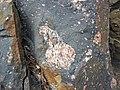 Clast-rich impact pseudotachylite (Sudbury Breccia, Paleoproterozoic, 1.85 Ga; Windy Lake Northwest roadcut, Sudbury Impact Structure, Ontario, Canada) 26 (47739572531).jpg