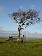 Cleeve Cloud, Cleeve Hill - geograph.org.uk - 294226.jpg