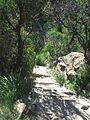 Cliffwalk Leura Cascades.JPG