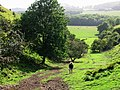 Climbing up the escarpment on to the North Downs - geograph.org.uk - 988545.jpg