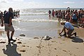 Coast Guard sailors rescue endangered sea turtles - 130902-G-BD687-002.jpg