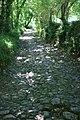Cobbly Lane, Avonwick - geograph.org.uk - 1066324.jpg