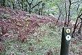 Coed Morgannwg Way - geograph.org.uk - 994821.jpg
