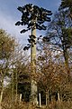 Communications mast in disguise, Bisterne Close, New Forest - geograph.org.uk - 625133.jpg
