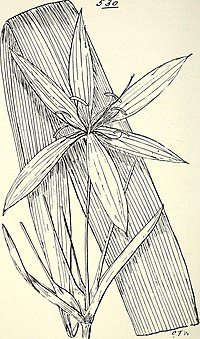 Comprehensive catalogue of Queensland plants, both indigenous and naturalised. To which are added, where known, the aboriginal and other vernacular names; with numerous illustrations, and copious (14783062315).jpg