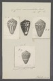 Conus vermiculatus - - Print - Iconographia Zoologica - Special Collections University of Amsterdam - UBAINV0274 086 05 0009.tif